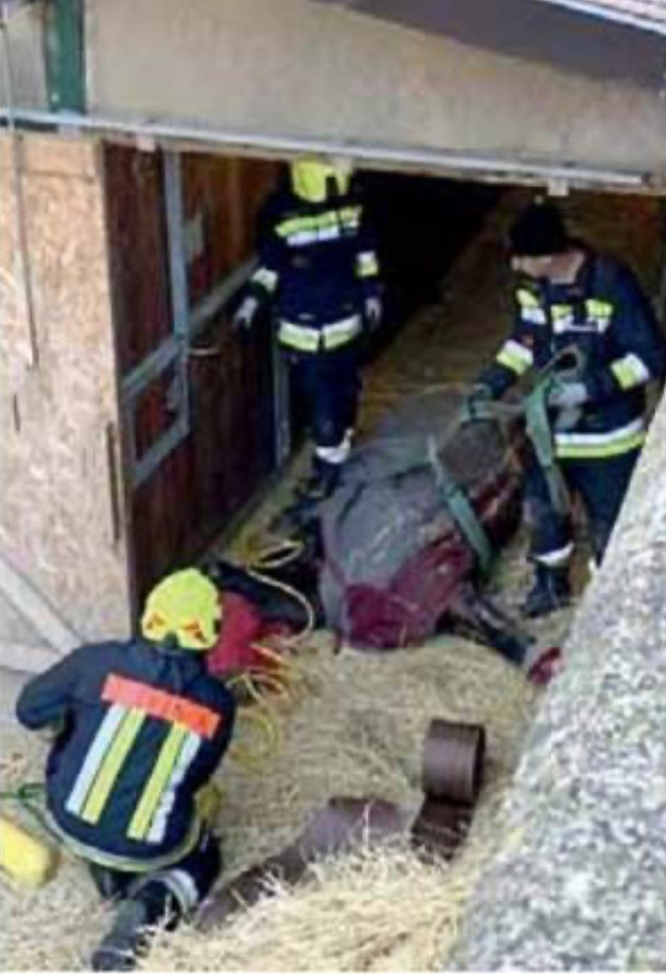 """Comune Di Lana Bz lana, cavallo muore a capodanno. l'accusa """"sono stati i"""