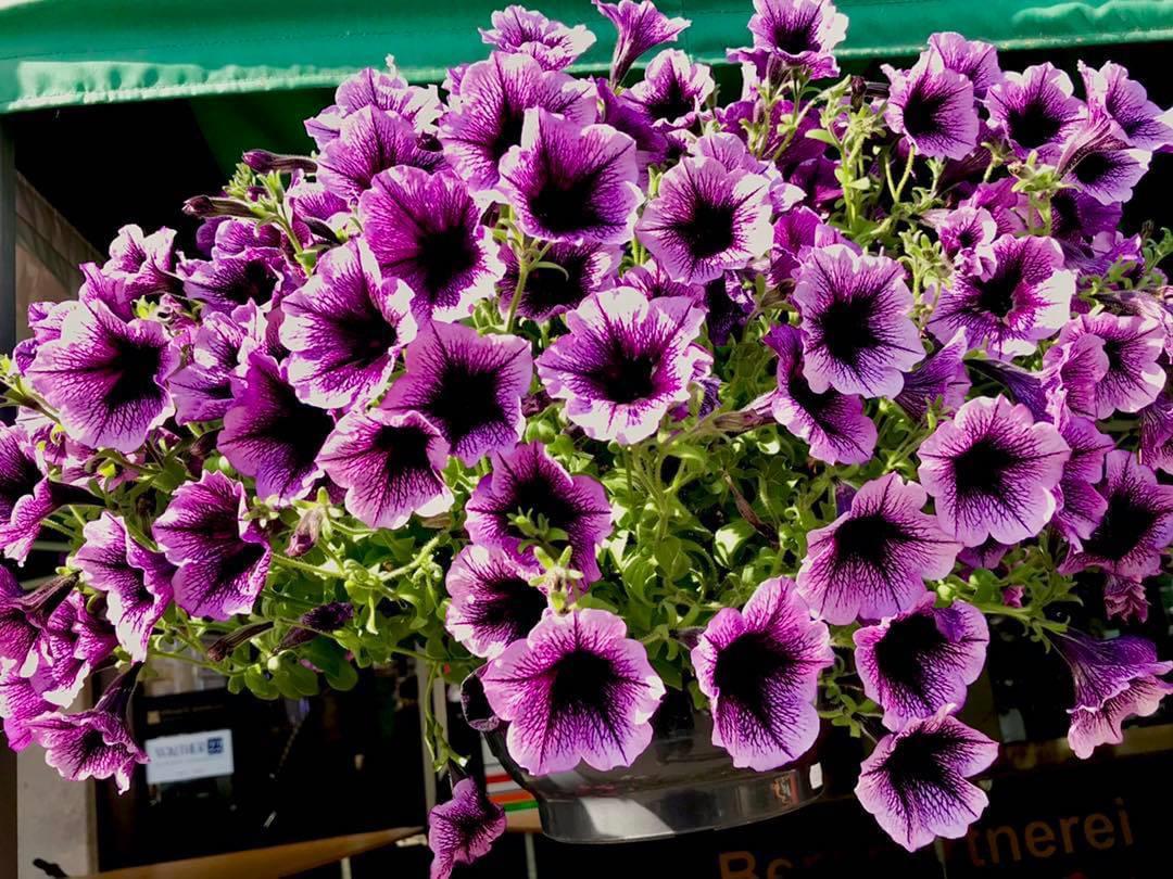 Festa dei fiori, venerdì l'omaggio floreale dell'Azienda ...